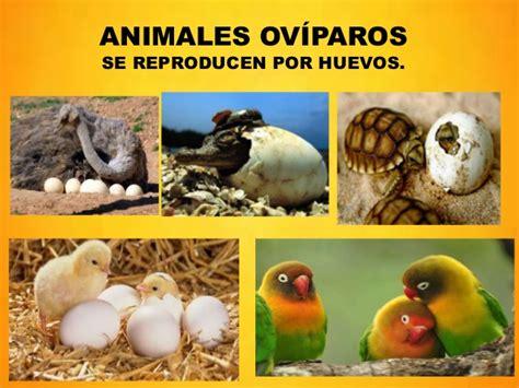 imagenes de animales viviparos y oviparos nacimiento y crecimiento de humanos y animales