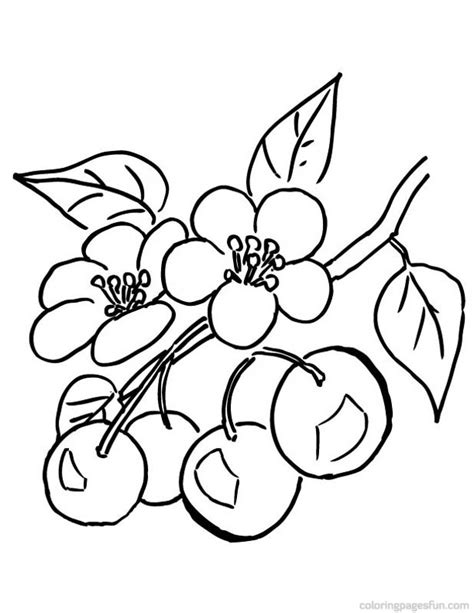 coloring page cherry tree cherry blossom coloring pages az coloring pages