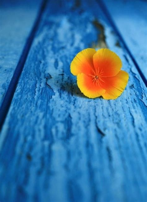 orange and blue combination 51 best all things orange and blue images on pinterest