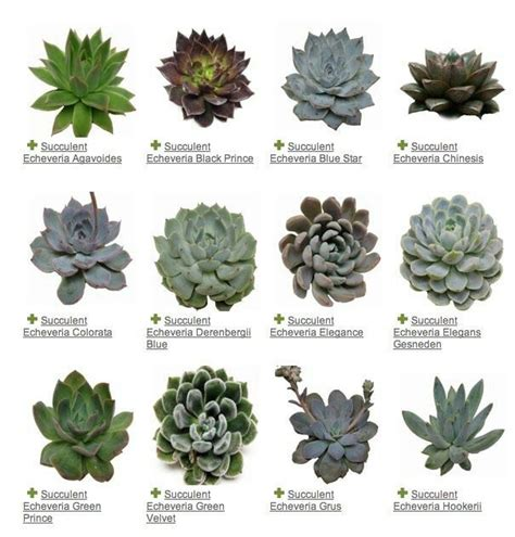 different types of succulents one day pinterest