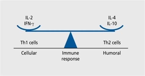 innate immunity a question of balance the balance between th1 cell mediated and th2 humora