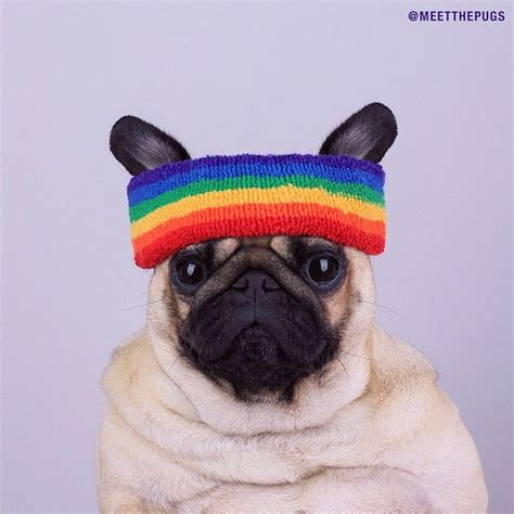 do pugs sweat 207 best images about loulou co on blinded by the light mondays and pug