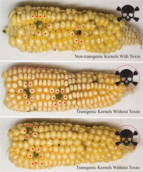 small food this small molecule could a big future in global food security