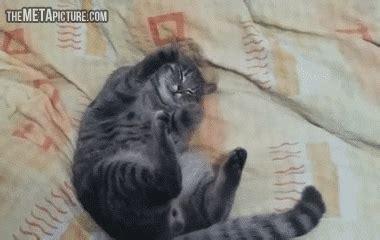 Kater Milchtritt Decke by Wenn Bedenkt Dass Katzen Tapsen Um An Die Milch