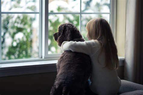 filme schauen a dog s journey chart shows when it s ok to leave kids home alone simplemost