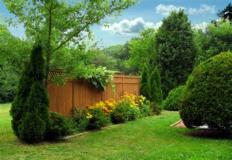 backyard shrubs privacy 38 clever backyard shrub garden ideas