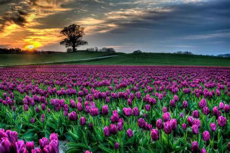Thermostatic Bath Mixer Shower tulip feilds roozengaarde the happy wonderer ellen b