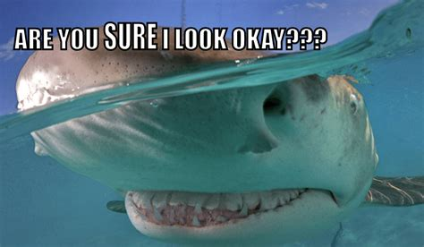 Shark Meme - cute sharks 15 apex predators you may feel compelled to