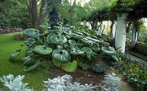 il giardino segreto napoli il giardino segreto foto giorno corriere