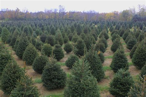 starting a christmas tree farm my blog