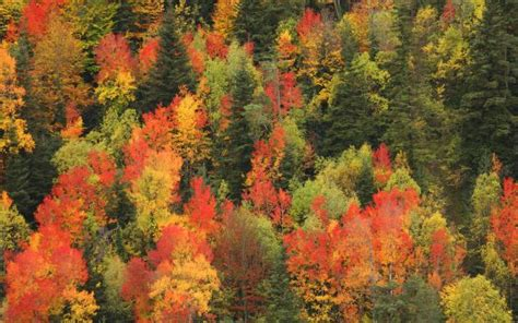imagenes de paisajes sin color diez paisajes fabulosos para el oto 241 o el viajero el pa 205 s