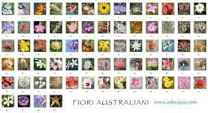 fiori di bach australiani diluizioni di fiori di bach e australiani farmacia zanini
