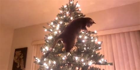 cat attempts to climb christmas tree video huffpost uk