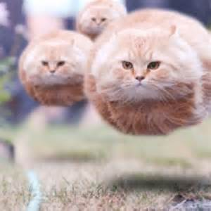 Flying Cat Meme - 20 best images about pilot cats aviation humor on