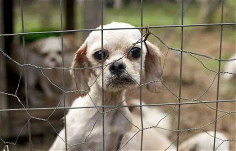yorkie puppies durham nc 50 dogs rescued from suspected puppy mill in rutherford county abc11