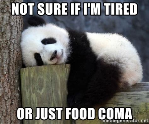 Food Coma Meme - not sure if i m tired or just food coma sleepy panda
