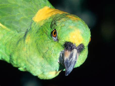 why do birds live so long