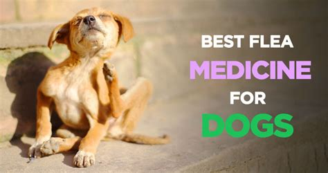 best flea and tick medicine for dogs best flea medicine for dogs tick flea and treatment