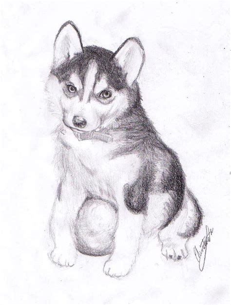 husky puppy drawing pics for gt husky puppy drawings
