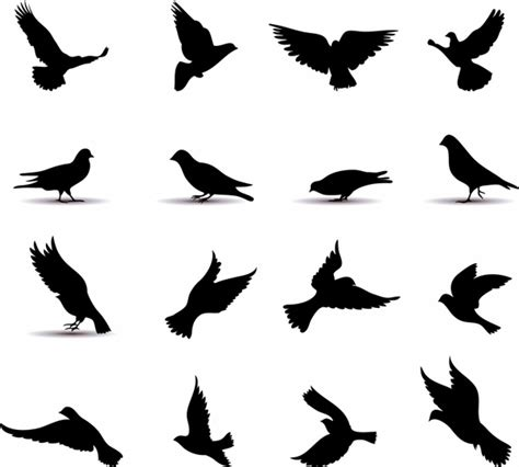 flying pigeon draw free vector download 90 659 free