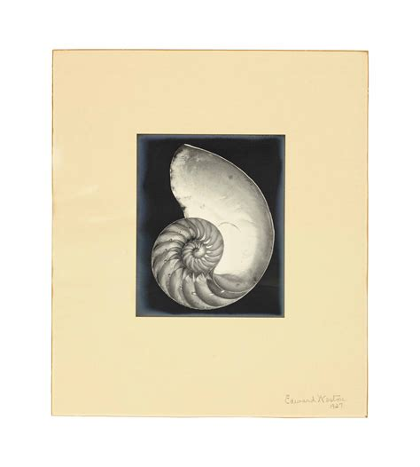 edward weston 1886 1958 icons edward weston 1886 1958 nautilus shell 1927 christie s