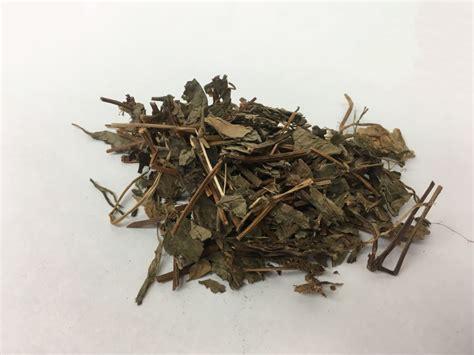 Yu Xing Cao Ekstrak Heartleaf Houttuynia Herb Herba Houttuyniae 鱼腥草 chameleon plant
