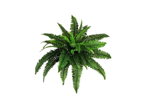 decorative plants png plants png transparent free images png only