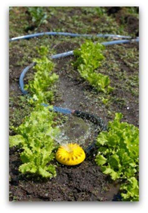 Vegetable Garden Irrigation How Much And How Often How Often To Water Vegetable Garden