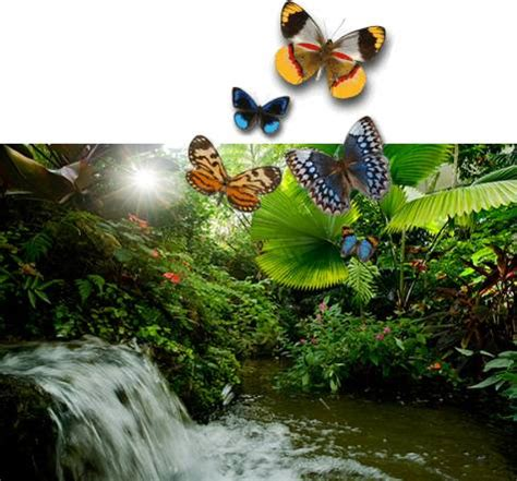 Gainesville Butterfly Garden by Gainesville Florida Gardens And Zoo Mike Hastings Realtor