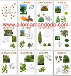 diy vive la for 234 t fabrique ton herbier activit 233 carnet