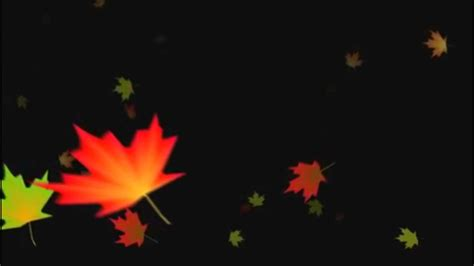falling autumn leaves background loop  youtube