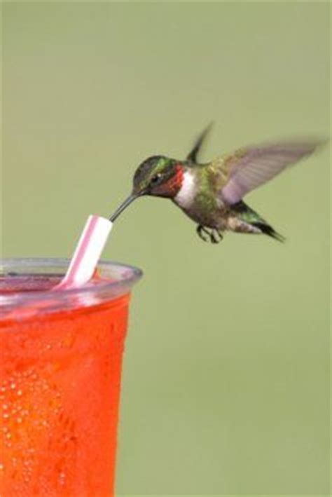 hummingbird food recipe 2 c water 1 2 c sugar recipes