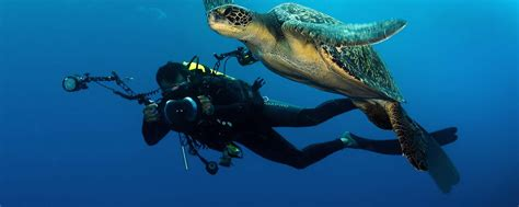 dive packages costa rica scuba diving packages diving vacations