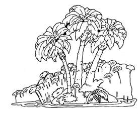 rainforest coloring pages rainforest pictures to print coloring home