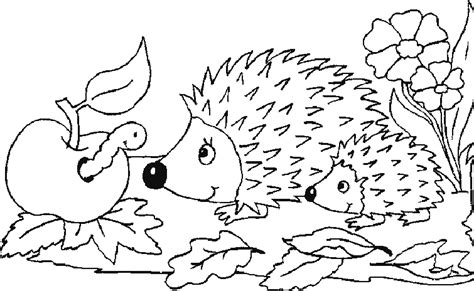 baby hedgehog coloring page hedgehog coloring pages