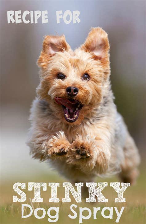 recipe for good smelling dog shoo recipes for stinky dog spray