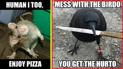 The Funniest Meme - funniest memes from the animal kingdom ツ youtube