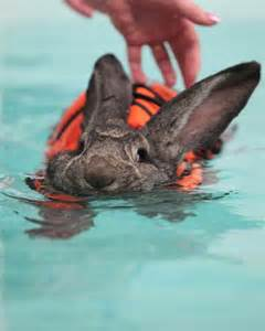water rabbit heidi heals with hydrotherapy today com