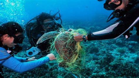 imagenes raras del fondo del mar ya estamos en el fondo del mar con la contaminaci 243 n