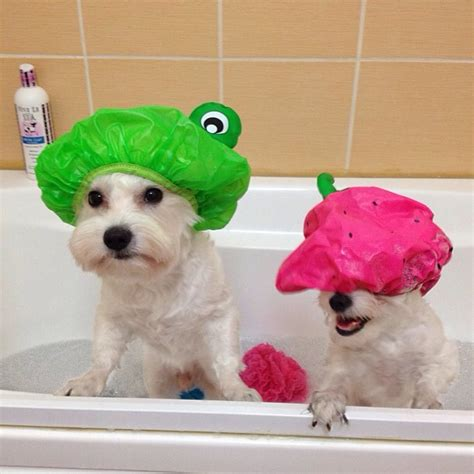 dog in a bathtub 38 brilliant dog care ideas to make your life easier