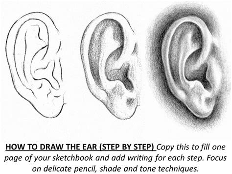 How To Draw Ear How To Draw Ear Step By Step Worksheet Basics