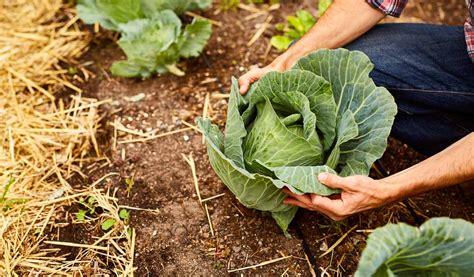Que Peut On Planter En Septembre by Plantation Septembre Que Planter En Septembre Lacgumes Et