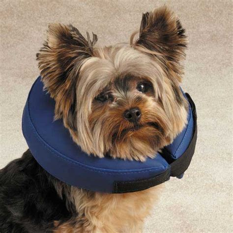 elizabethan collar for dogs pet puppy total pet health soft elizabethan collar vet ebay