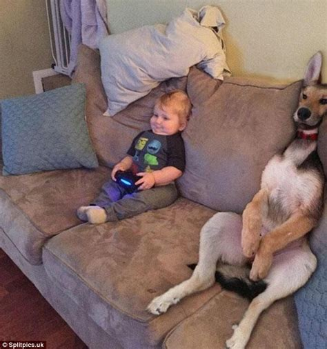 dog misses couch optical illusions will make you look twice daily mail online