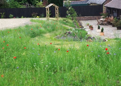 using wild flowers in gardens wild flower lawns meadows buy wildflower seeds wildflower