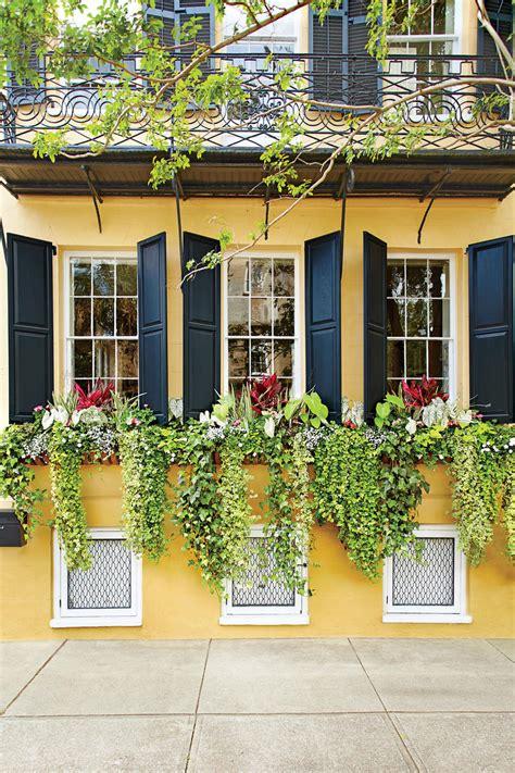 window box ideas  flowers  plant  season