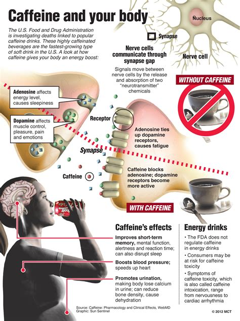 Does Caffeine Affect Detox by What Caffeine Actually Does To Your Brain Fabulously Fit