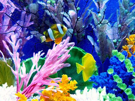 wallpaper pemandangan bawah laut artikel luarbiasa