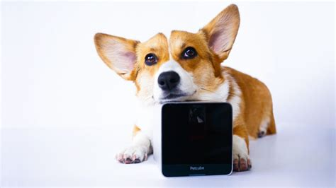 gadgets for pets coolest gadgets and gizmos for pets 5 new inventions that