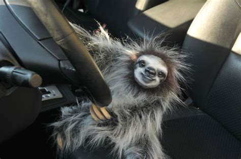 irti funny picture  tags happy sloth driving car smile